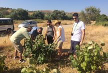 Wine Tour in Greece / We are happy to welcome our partners in this summer wine adventure