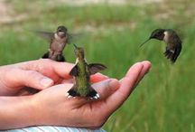 Hummingbirds / by Renee Andona