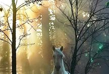 Magic horses / Special