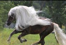 Horses / by Geneva Bringardner-Deville