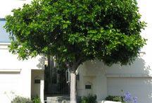 Patio / Small Trees - Los Angeles