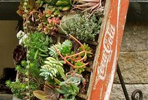 Gardening / by Anita Pendell