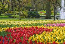 most wonderful gardens