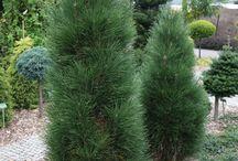 Растения / Фотографии растений и деревьев