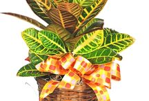 Green & Blooming Plants / Houseplants are a great way to brighten up the indoors and improve air quality. They make a great gift for birthdays, get well or just because! We offer a wide variety of green plants, blooming plants, and orchids. We delivery flower nationwide, but our local delivery area includes Punta Gorda, Port Charlotte, Englewood, North Port and most Charlotte Harbor areas. Get more ideas on our website: http://www.portcharlotteflorist.net/plants/