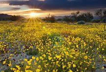 Beautiful Fields, Meadows