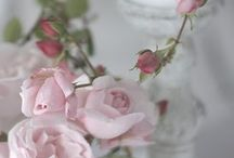 Flowers for the house and deco