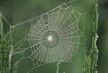 Spider & webs
