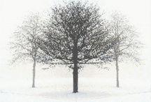 černobílé stromy