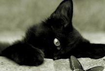 Black cats / by Jude Radley