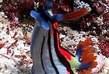 Diving Rote Indonesia