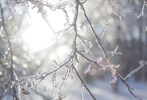 Ice & Snow / by Sheila Kjaerhus