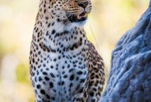 Wild about wildlife / A chance to get away from our everyday lives becomes even more real when we can observe nature up close and personal.  A remote hotel or adventures allow us to see animals in all their splendor and makes for a perfect vacation.