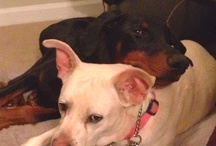 my dogs...my loves  / by Stephanie Hapner