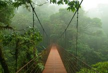 RAINFORESTS & JUNGLES TO TREK