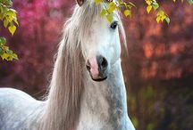 Horses and ponies / This is what I really love