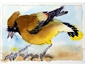 Bird Watching / by Danya Chait