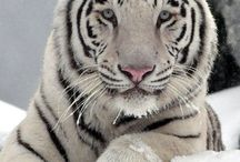 ALL THINGS BRIGHT AND BEAUTIFUL, CREATURES TOO !! / ANIMALS THAT MAKE YOU SMILE !!