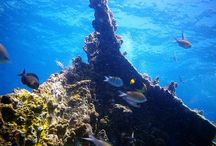 Dive Places