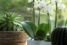Fleurs entretien