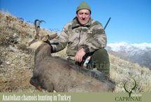 Anatolian Chamois hunting in Turkey
