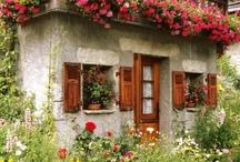 Jardinería mini de fantasía / Macetas y arreglos de plantas en miniatura