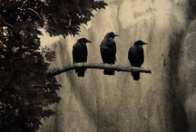 Crows & Ravens  / by Di Hernandez