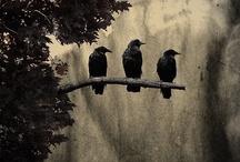 Crows & Ravens  / by Di Hernandez