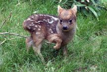 Cute Animals / by Karen Poole