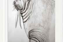 walrusels