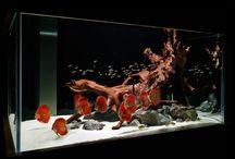 fish tank set ups