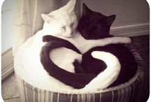 Just cute...