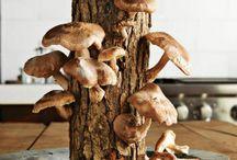 mushrooms time