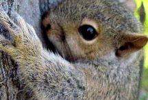 Sweet animales / Søte dyr som er litt farlige også