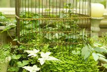 Plants★
