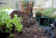 Mi jardín / gardening