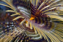 Sea tube worm