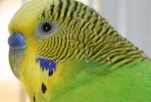 Birds / by Lindsay E