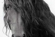 Animals / Beautiful pictures of animals, most of them are and will be horses
