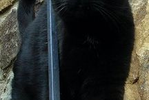 Fekete macskák