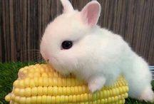 Minik hayvanlar / Köpek dışındaki kedi gibi minik ve tatlı hayvanların ansiklopedisi