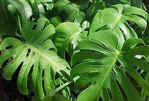 piante amiche / ☯