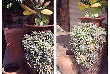 For the love of succulents, the living wall Creative plant ideas-Container gardening / Refuse re-used. Ideas for broken pots and other junks and save them from the landfill.