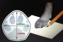 Medidas zapatos paca