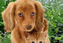 Pets Animals dearest