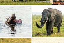 Botswana / Reisetipps für Botswana: Okavango, Gaborone Botswana, Chobe, Botswana Safari