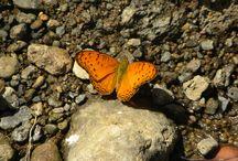 Butterfly / 0