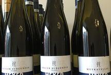 Weingut Andreas Meyer bei neungrad Berlin / Wein Deutschland
