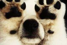 Puppies!! / by Judy Ascenzi