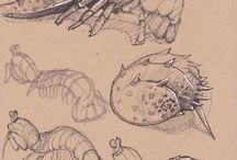 Insects drawing